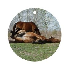 Payne's Prairie Wild Horses Minacop Round Ornament