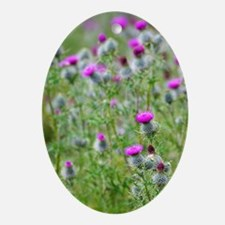 Spear thistle (Cirsium vulgare) Oval Ornament