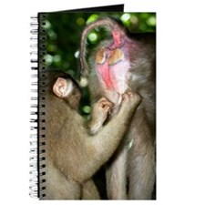 Southern pig-tailed macaques Journal
