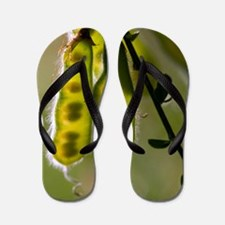 Spanish Broome (Spartium junceum) Flip Flops