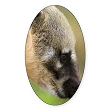 South American coati Decal