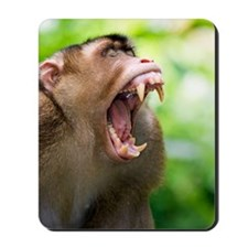 Southern pig-tailed macaque Mousepad