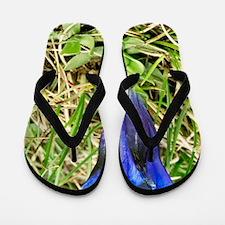 Southern gentian (Gentiana alpina) Flip Flops