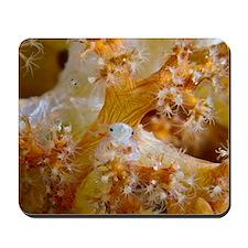 Soft coral crab Mousepad