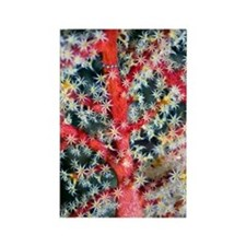 Soft coral Rectangle Magnet