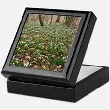 Snowdrops (Galanthus) in woodland Keepsake Box