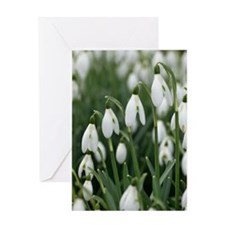 Snowdrop (Galanthus nivalis) flowers Greeting Card