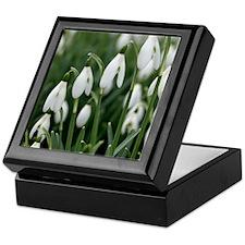 Snowdrop (Galanthus nivalis) flowers Keepsake Box