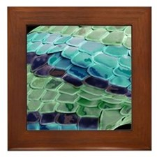 Snake skin, SEM Framed Tile