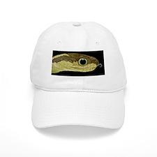 Snake head, SEM Baseball Cap