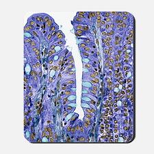 Small intestine lining, light micrograph Mousepad