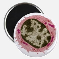 Small lymphocyte, TEM Magnet
