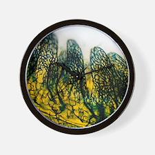 Small intestine, light micrograph Wall Clock