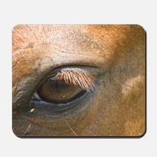 Eye of the Gelding Mousepad