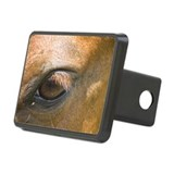 Reining horse quarter horse Rectangle