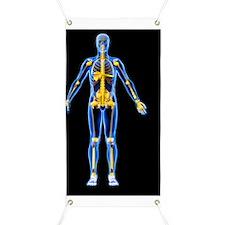 Skeleton and ligaments, artwork Banner