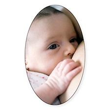Six week old baby girl breastfeedin Decal