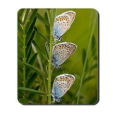 Silver-studded Blue Butterflies Mousepad