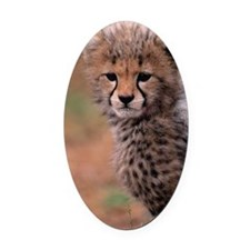 Cheetah cub, Masai Mara National R Oval Car Magnet