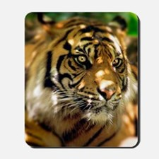 Siberian Tiger Mousepad