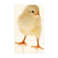 Baby chicken Decal