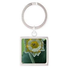 Show auricula 'Greenpeace' flower Square Keychain