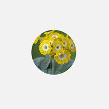 Show auricula 'Golden Fleece' flowers Mini Button