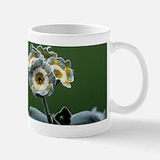 Show auricula 'Monk' flower Mug