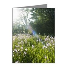 Wildflowers in field Note Cards (Pk of 20)