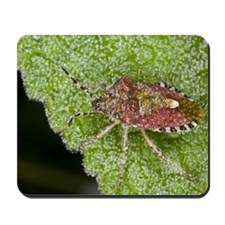 Shield bug Mousepad