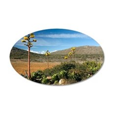 Shaw's agave (Agave shawii) 35x21 Oval Wall Decal
