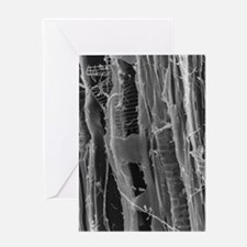 SEM of dry rot in plywood Greeting Card