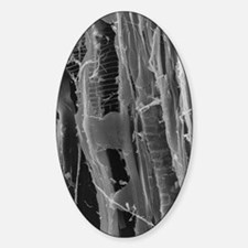 SEM of dry rot in plywood Decal