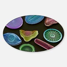 Selection of diatoms, SEM Decal