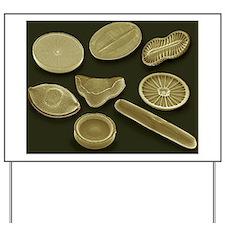 Selection of diatoms, SEM Yard Sign