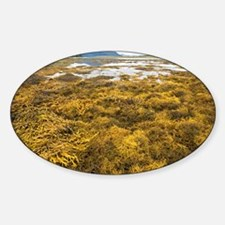 Seaweed colony Sticker (Oval)