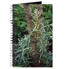 Sea buckthorn (Hippophae rhamnoides) Journal