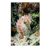 Seahorse Postcards