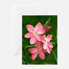 Schizostylis coccinea 'Sunrise' Greeting Card