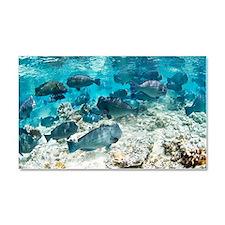 School of bumphead parrotfish Car Magnet 20 x 12