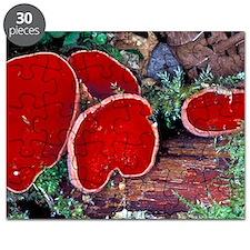 Scarlet elf cup fungi Puzzle