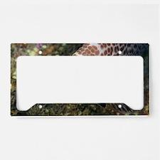 Scamp License Plate Holder