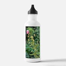 Satin poppy (Meconopsi Water Bottle