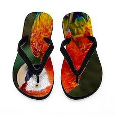 Scarlet macaw Flip Flops