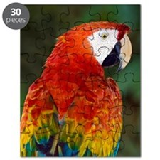 Scarlet macaw Puzzle