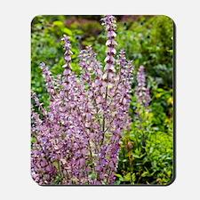 Salvia sclarea var. turkestanica Mousepad