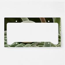 Sage leaf oil gland License Plate Holder