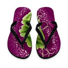 S. maltophilia bacteria, TEM Flip Flops