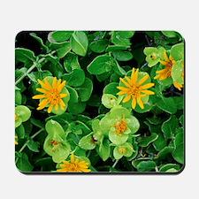 Salad Bush (Didelta spinosa) Mousepad