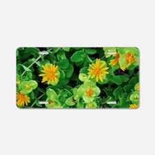 Salad Bush (Didelta spinosa Aluminum License Plate